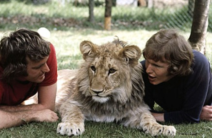 Gratitube, love knows no limits, a lion called christian, christian the lion, animal welfare, friendship, love between man and animal, man and animal